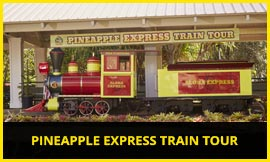 PINEAPPLE EXPRESS TRAIN TOUR